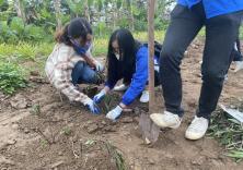 CNX2020 - Vườn cây thanh niên
